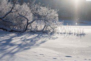 vinter (1 av 1)-4