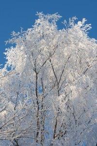 vinter (1 av 1)-6