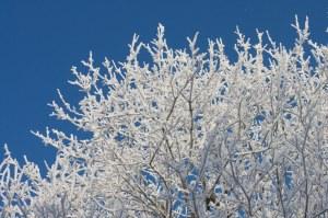 vinter (1 av 1)