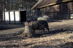 gris (1 av 1)