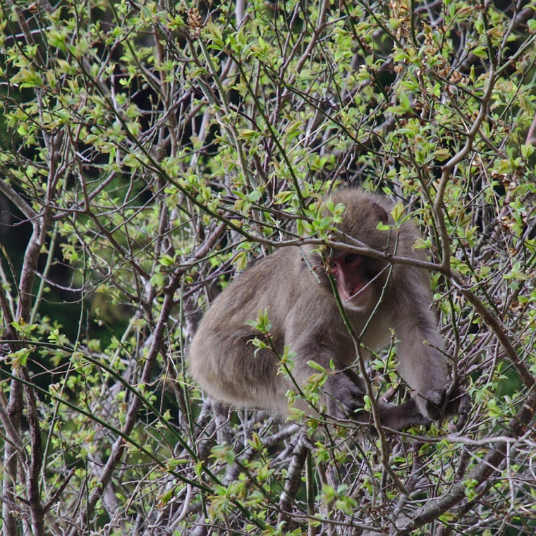 Riktiga apor i det fria!