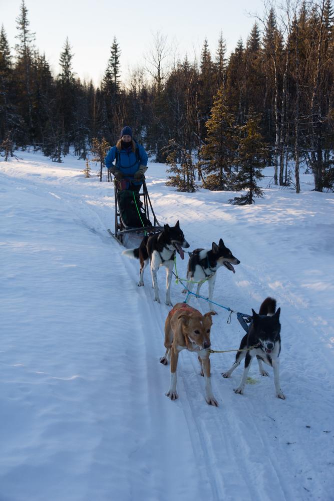 hundar (1 av 1)-4