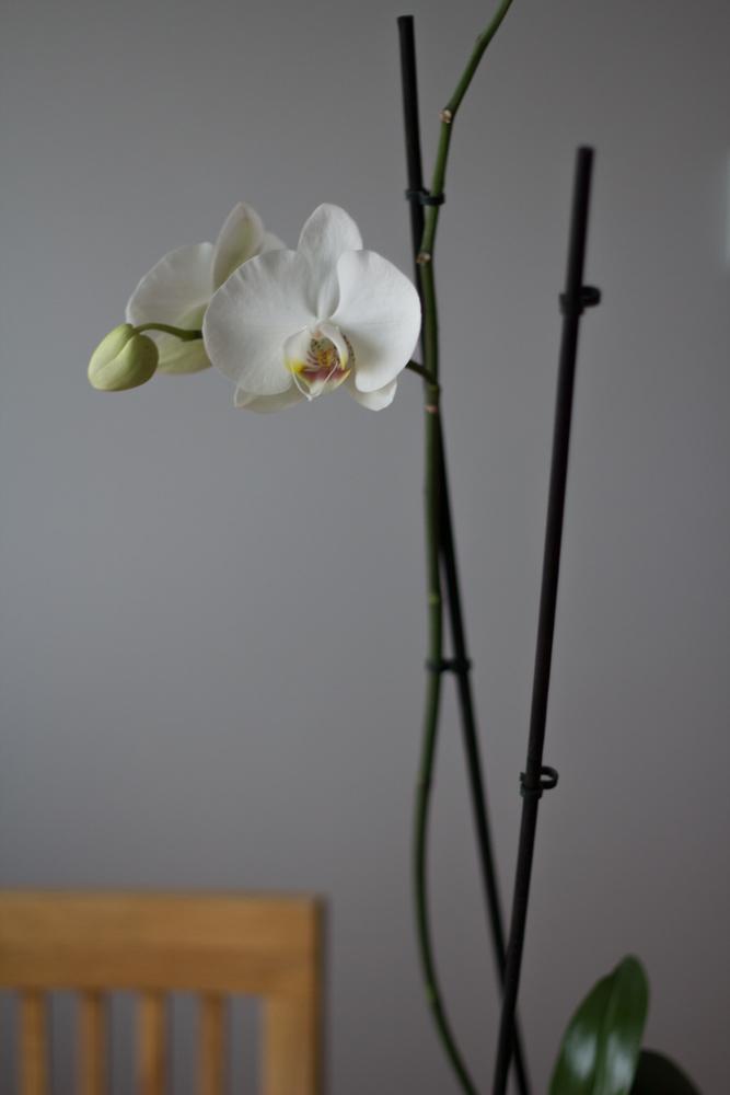 orkidé (1 av 1)